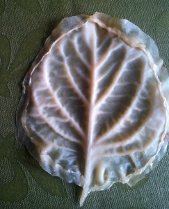 textura de hoja de hortensia